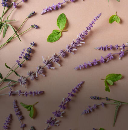 mint leaves and lavender