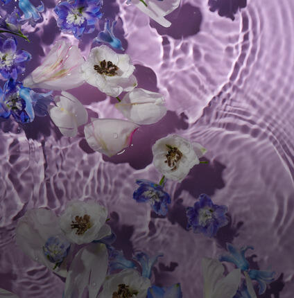 flower petals and blossoms floating on water